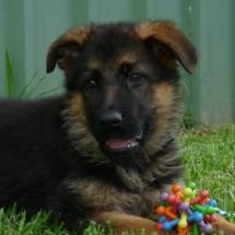 Puppy5